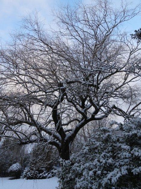 2013 01 jour de neige