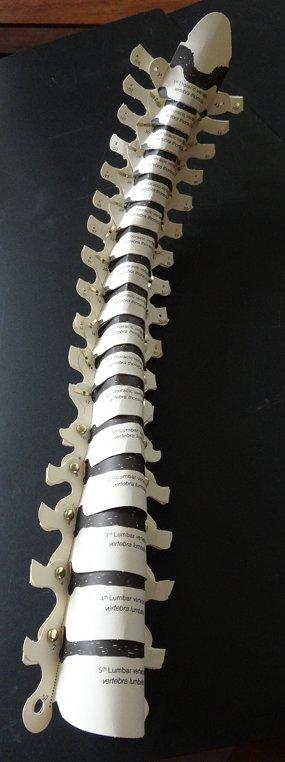 2013 squelette colonne complète