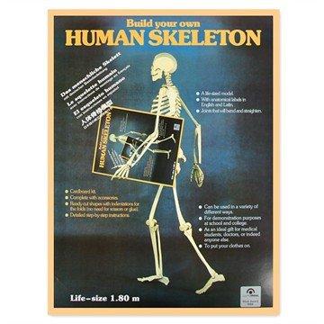 squelette chez nat et décou