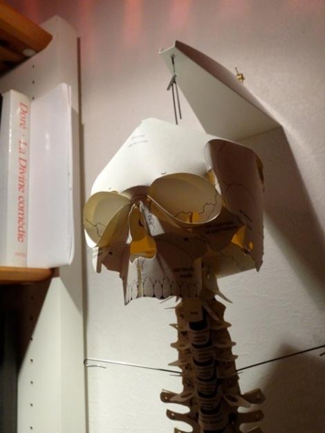 squelette tête colonne 2détail