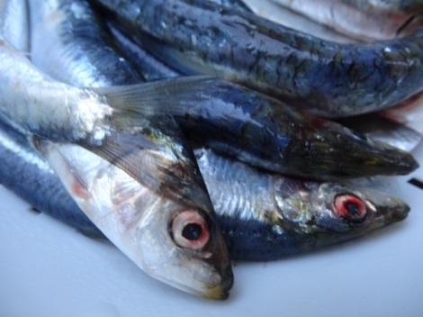 20145 07 sardines 2