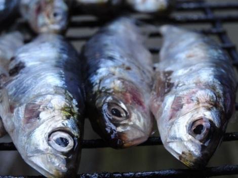 2015 07 sardines 3