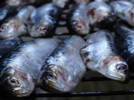 2015 07 sardines 4