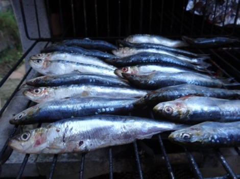 215 07 sardines 1